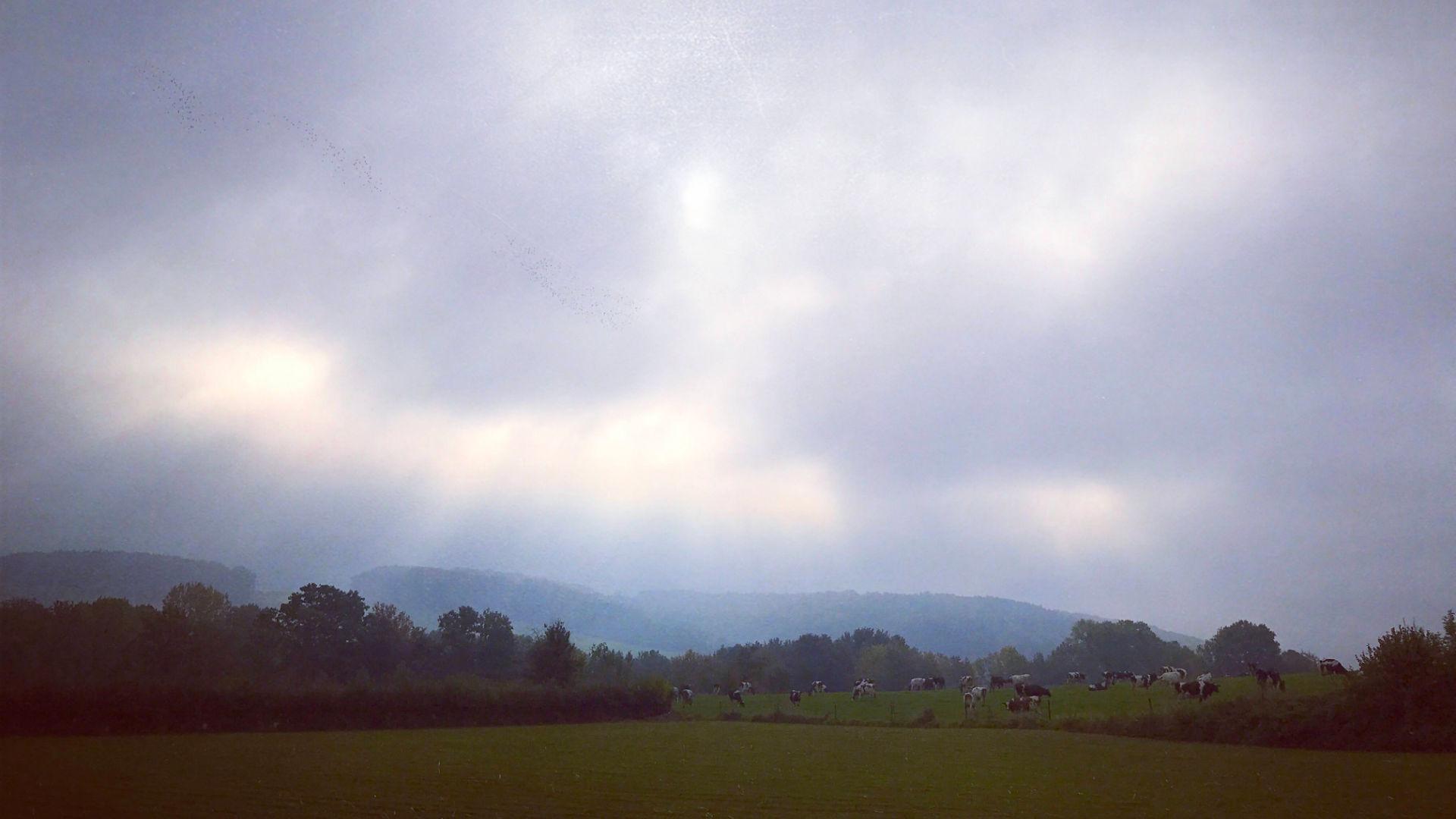 Zonnestralen weiland beutenaken zuid-limburg