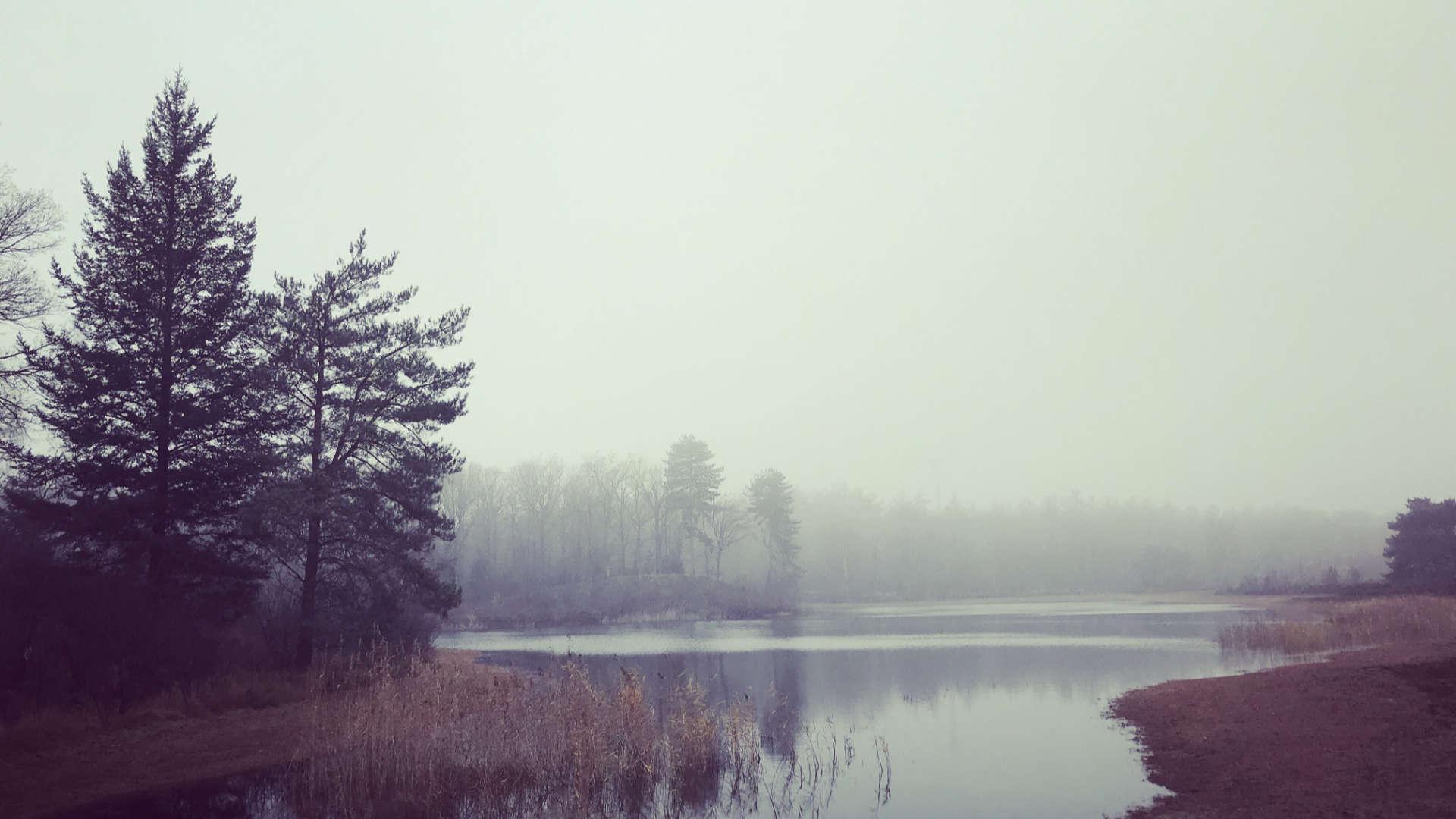 oude vijver zwarte dennen mist