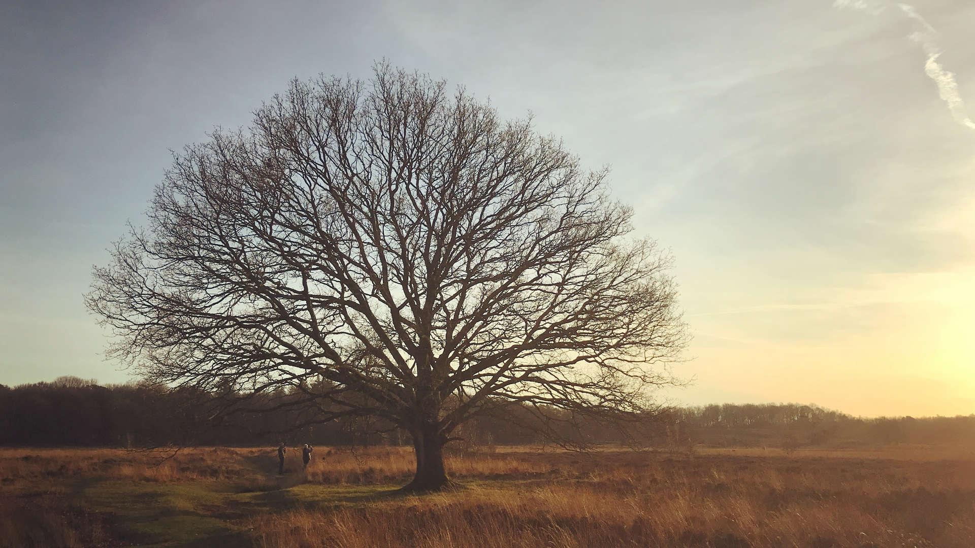 eenzame boom holtingerveld